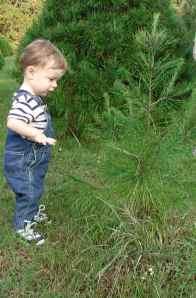 hunter_tree2