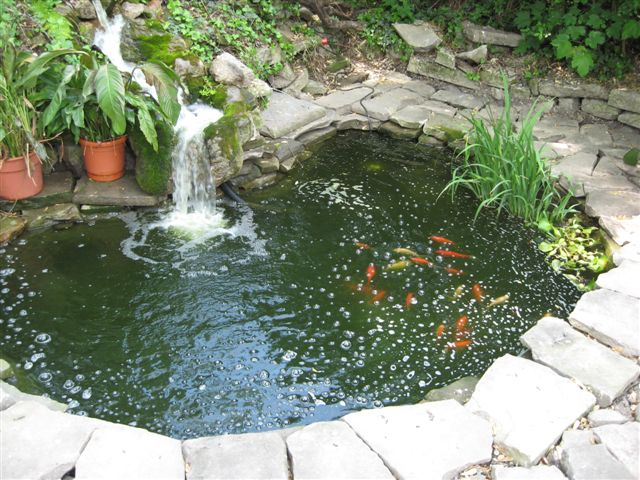 The ghost in the pond that woman 39 s weblog for Goldfish pond