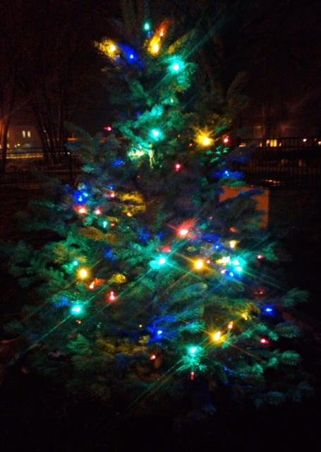 Gabes Tree 122412