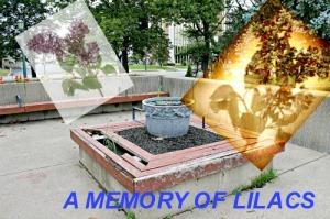memory oflilacs