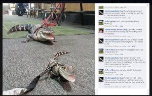 dyes-aligators