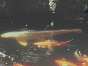 fish1res
