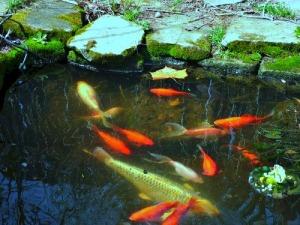 fishres