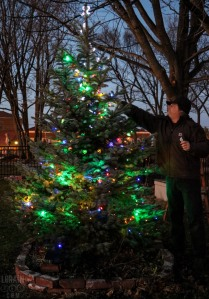 lighting-gabes-tree-122215