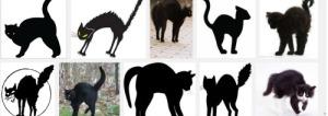 black-catres