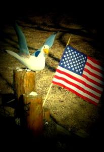 seagullres